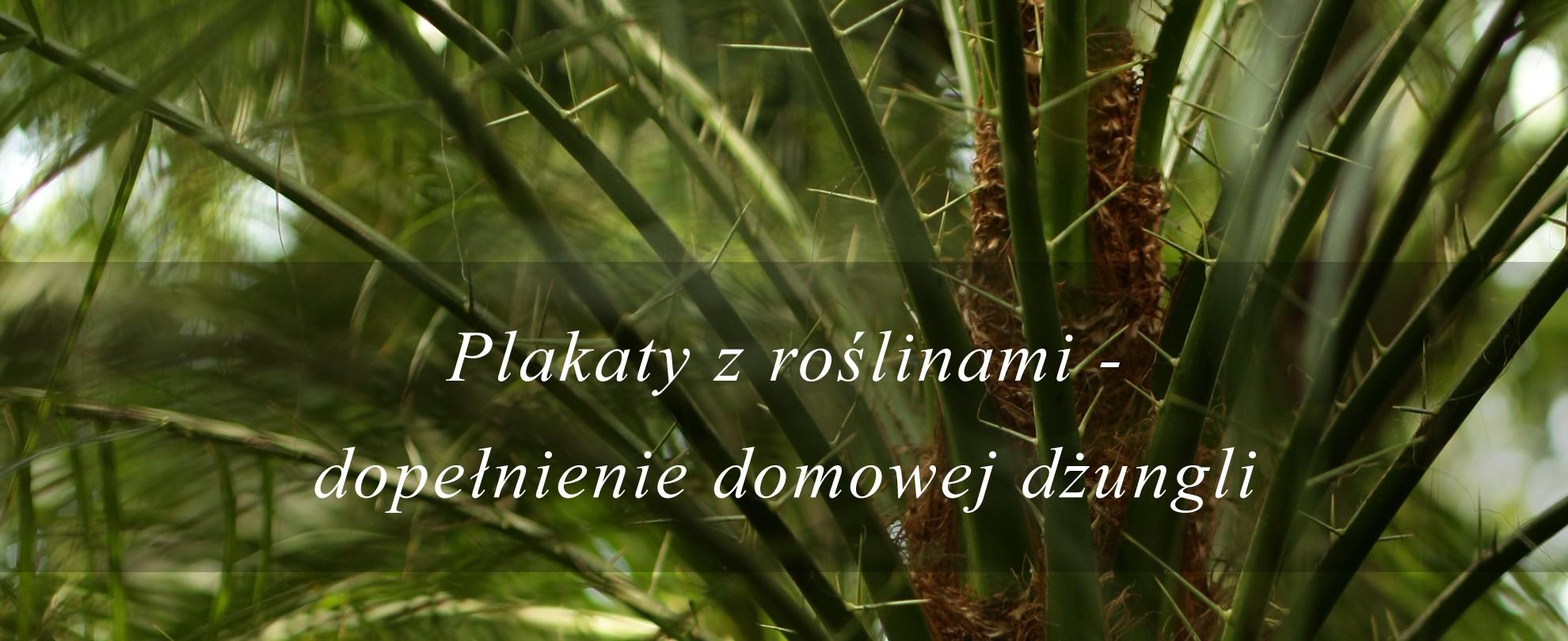 Plakaty z roślinami do domowej dżungli